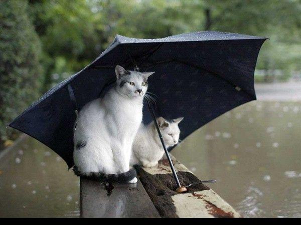 il pleut !!!!!!