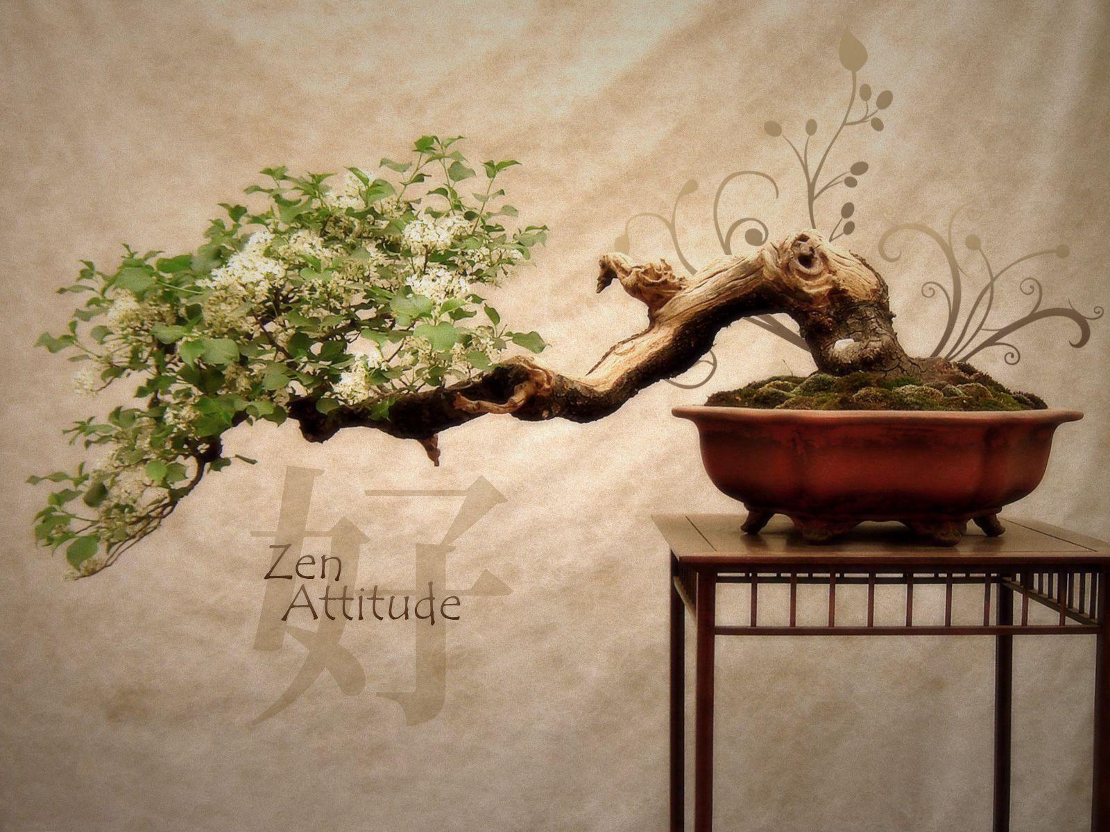 Zen how to meditate