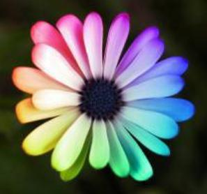 Un monde couleur bonheur