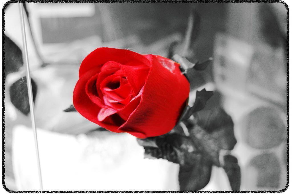 Fleur page 9 for Salon noir rouge et blanc